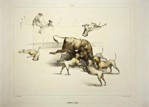 """Perros al toro"""